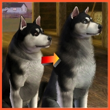 Alaskan Malamute Improved By Littlev The Exchange