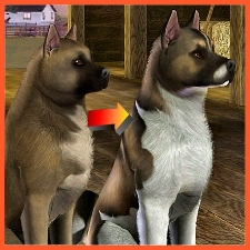 American Akita Improved By Littlev The Exchange