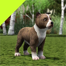 Improved Puppies Pitbull By Littlev The Exchange