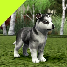 Sims Cats And Dogs Site Youtube Com